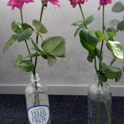 Test roses eau minérale la plus pure Velleminfroy