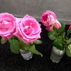Test roses avec eau vertueuse Velleminfroy